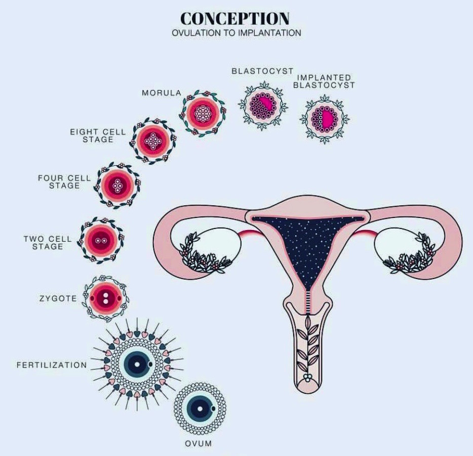 Predicting Your Ovulation Eggsperience